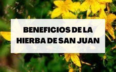 Hierba de San Juan o hipérico: beneficios y para qué sirve
